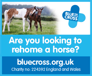 Blue Cross 2020 B (Wirral Horse)